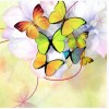 Full Drill - 5D Diamond Painting Kits Colorful Butterfly Picture